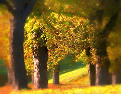 Still autumn (regina_austria) Tags: trees art fall colors austria bravo searchthebest herbst bume soe breathtaking ih allee smorgasbord themoulinrouge naturesfinest auntumn magicdonkey 100faves instantfave goldenmix mywinners aplusphoto superbmasterpiece goldenphotographer treesubject diamondclassphotographer flickrelite onlythebestare reginaaustria naturewatcher wonderfulworldmix excapture perfectphotographer flickrslegends goldstaraward bellsimamydearfriend