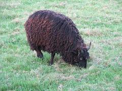 berlingen 2007 (seechat.de | Die Bodensee Community) Tags: 2007 berlingen pferden bambergen ponysrindernschafeziegenhasenundziergeflgelgeflgelvgelschweine bodenseecommunity