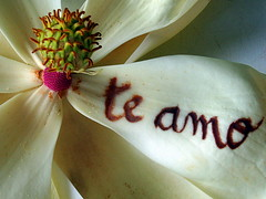 Te amo,I love you (Alejandra Villarroel) Tags: chile flowers naturaleza flores nature searchthebest flickrsoupforthesoul flowercloseup nationalgeographic oneshot naturephotography smorgasbord photopostcard oneworld travelphotography naturesfinest macrophotos blueribbonwinner theworldthroughmyeyes flickrsmileys mywinners perfectangle worldlandscapes impressedbeauty flickrenvy flowerwatching diamondclassphotographer flickrdiamond ysplix thenaturegroup macromix flowersmakeeveryonehappy wonderfulworldmix maraalejandra everywherewalks exhibetusfotos secretlifeofwhite macroflowerlovers fabulousflora naturaeza tendenciasycreatividad alejandravillarroel