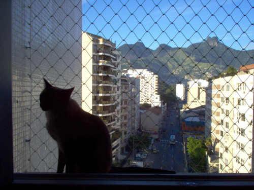 Annita na janela