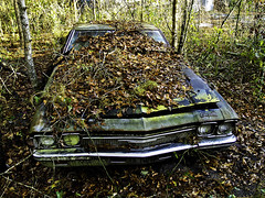 Chevelle (tantrum_dan) Tags: chevrolet abandoned leaves car florida olympus chevelle chevy micanopy e500 tantrumdan tantrumimagery