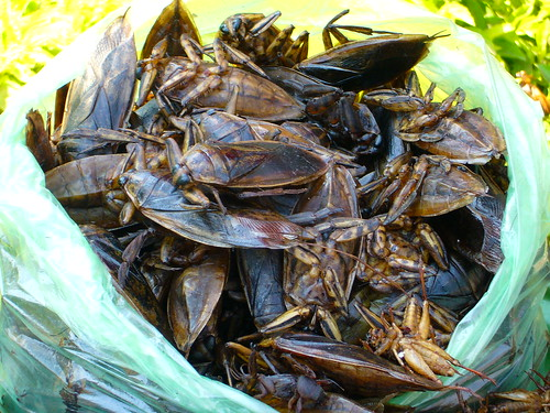 Closeup of Cambodian roasted insects