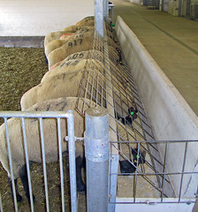 Coping With High Feed Costs