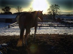 The Lone Ranger (maggiedeephotographer) Tags: sunset horses horse beauty evening bravo warm warmth dramatic drama peopleschoice abigfave anawesomeshot maggiedeephotographer theperfectphotographer chevauxcavallo