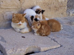 Tunisian Cats (MLB on the road) Tags: cats sousse ribat tunisiatunisie