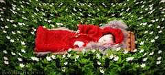 Baby Of The Woodland Folk (Lisa Rsten  |  Fotografix Studios) Tags: flowers baby color art forest woods infant naturallight magical imp f28 childphotography hvitveis 2470mm nikond3 nicholevansoftcolorpop fotografixstudios