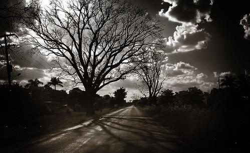 Arboles secos – Como raices alcanzando el cielo
