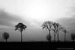 Missing (Johan Konz) Tags: winter rural road trees clouds outdoor landscape atmosphere nikon d90 purmerland waterland netherlands tree blackandwhite monochrome silhouette sky