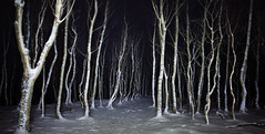 Ghost Wood (J C Mills Photography) Tags: wood longexposure trees snow lightpainting rain night woodland landscape wind derbyshire peakdistrict creepy torch flashlight birch bolehill