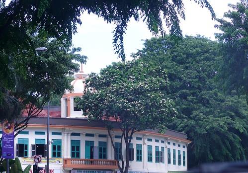 Syzygium_grande-flowers09-bencoolen_street.jpg