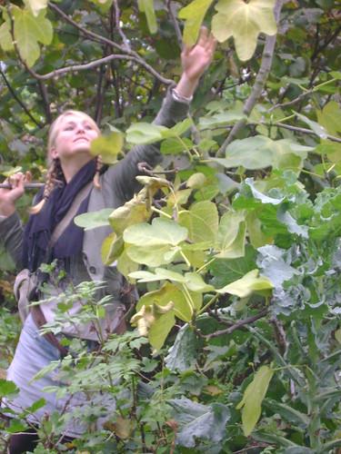 Naturewise Forest Garden