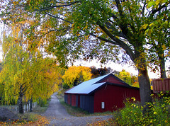 barn in falltime (Per Ola Wiberg ~ Powi) Tags: autumn trees oktober fall nature beautiful barn wow ilovenature october niceshot harmony soe lada mothernature shiningstar birches hst 2007 falurd naturegroup favoritephotos fotoclub natureworld americaamerica autumnfall eker instantfave bjrkar ekebyhov naturesgallery mywinners micmarayyo natureandallitsbeauty amazingshots theothervillage flickrbronzeaward heartawards onlythebestare flickrsun ~vivid~ onlynatureaward sasaward flickridol yourbestphotoonflickr goldstaraward bestofautumnandwinter2007 natureandme scenicsnotjustlandscapes funfanphotos highqualityimages ilovemypics grupodehablahispana photographersgonewild naturesphotos angelawards addictedtonature naturesprime naturesribbon fireworksofphotos aboutthenaturewithlove level1photographyforrecreation natureskingdomawards