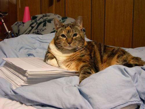 Cat, November 2004