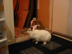 the buns discover the garage