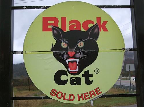 gambar kucing hitam cantik