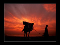 No ride today (Aliraza Khatri) Tags: pakistan sunset people love beach water silhouette fun person one golden bravo solitude alone culture scene riding camel lonely portfolio myfavorite popular karachi rider tranquil themoulinrouge magicdonkey travelandplaces myfavepic alirazakhatri sunsetofmydreams olmpusfe180 artinmyeye