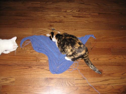 Shawl + 1 cat