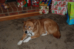 Jinxy (jacklynburgan) Tags: jinx christmas2007