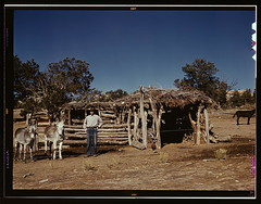 Mr. Leatherman, homesteader, with his work burros in front of his barn, Pie Town, New Mexico  (LOC) (The Library of Congress) Tags: sky newmexico west barn sticks wire cabin farm 1940 donkey hut homestead libraryofcongress burros mule pietown equine catroncounty homesteader xmlns:dc=httppurlorgdcelements11 dc:identifier=httphdllocgovlocpnpfsac1a34166