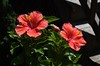 red flowers pink detail red detail wedding photo