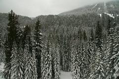 IMG_4986 (matthewpiatt) Tags: winter snow mountains cold ice nature forest snowshoe outdoors washington nordic stevenspass piatt matthewpiatt