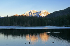 Sunset light at the Hintersee (rotraud_71 away again ~) Tags: lake mountains ice water forest reflections germany bavaria ducks bluesky hintersee berchtesgadenerland schneibstein hohergll mywinners worldbest natureselegantshots