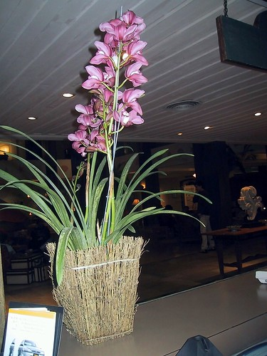 Orquideas,  Guaruj�