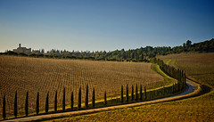Tuscan Vineyard...
