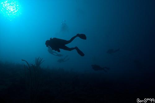 Utila Dive Trip