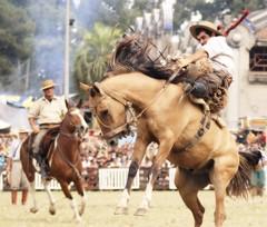 El gatea'o (Eduardo Amorim) Tags: horses horse southamerica caballo uruguay cheval caballos cavalos prado montevideo pferde cavalli cavallo cavalo gauchos pferd hest hevonen chevaux gaucho  amricadosul montevidu hst uruguai gacho  campero amriquedusud  gachos  sudamrica suramrica amricadelsur  sdamerika jineteada   camperos americadelsud gineteada  americameridionale campeiros semanacriolla semanacriolladelprado campeiro eduardoamorim