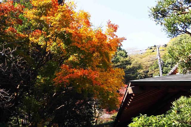 101128_114113_鎌倉_浄妙寺_枯山水庭園