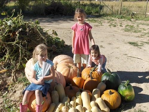 Squash harvest 2007