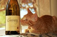 Freddie Selects The Evening Wine (merriewells) Tags: cats freddie coolest helluva supershot wowiekazowie