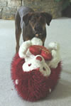 AJ, (Born 1/30/06) (muslovedogs) Tags: dogs puppy mastweiler myladyoffspring lilboyoffspring