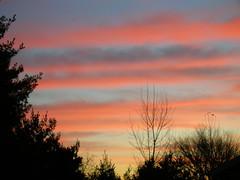 Sunrise, Backyard