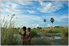 Gifts for survival [..Narayanganj, Bangladesh..] (Catch the dream) Tags: blue autumn sky cloud flower field season children bongo gift pick bengal bangladesh bangla bengali bangladeshi bangali blueribbonwinner abigfave narayangonj catchthedream gettyimagesbangladeshq2