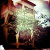 dreamy land !! (Twiggy Tu) Tags: trees sky 120 film lomo purple diana dreamy taipei oldbuilding pingshi