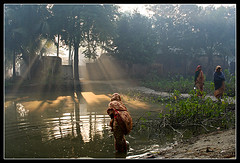 Light Worshippers [..Chuadanga, Bangladesh..] (Catch the dream) Tags: morning light woman water fog rural work dawn pond ray village streak walk bongo beam everyday bengal bangladesh bangla bengali bangladeshi bangali chuadanga anawesomeshot catchthedream gettyimagesbangladeshq2