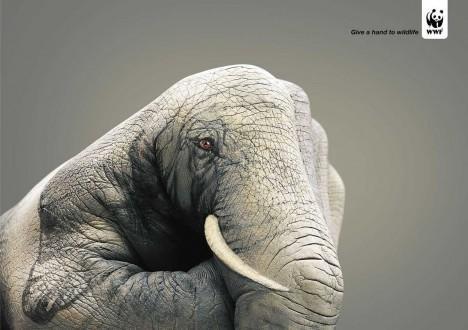 WWF_Olifant