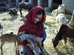 village Life in Sind Pakistan (Photo Plus 1 (Kamran Ahmed)) Tags: anawesomeshot aplusphoto superbmasterpiece diamondclassphotographer theunforgettablepictures betterthangood