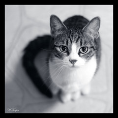 Molly (Mary T.) Tags: blackandwhite pet animal cat feline january molly 2550fav 300views 2008 cutecat 50mmf18 cc300 bestofcats artisticanimalphotos january2008 boc0108
