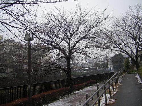今年初めての雪よね