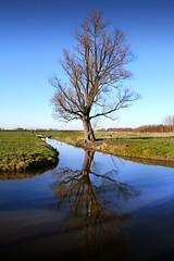 De Purmer Polder (shoot it!) Tags: blue trees winter tree bomen blauw boom clear gras 2008 clearsky sloot clearskies depurmer winter2008 depurmerpolder