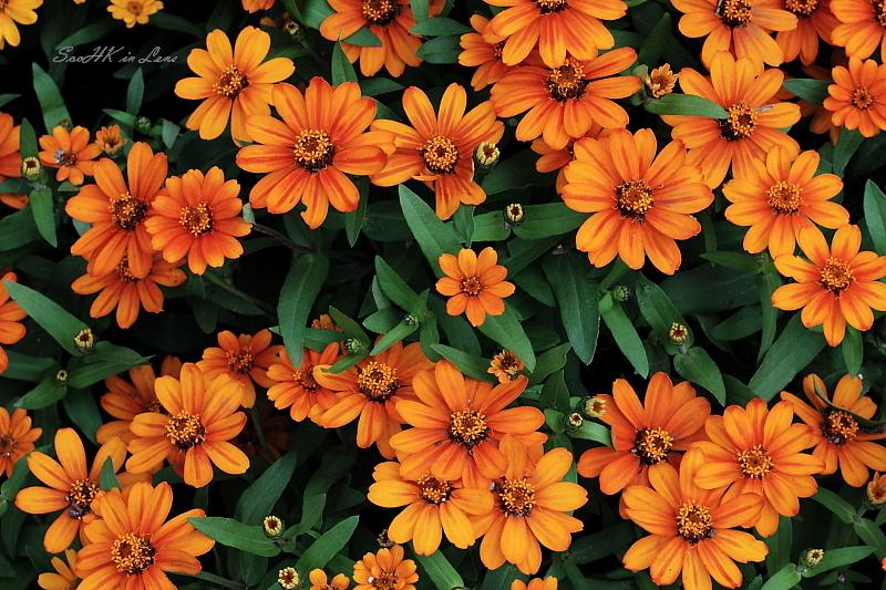 Flower @ Genting