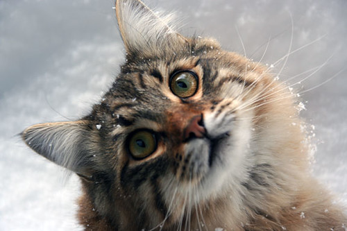Bubba snow cat
