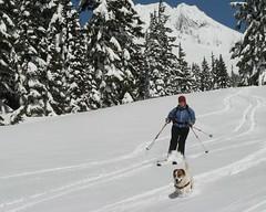 Glade Trail (shredmaximus) Tags: oregon skiing mounthood glade