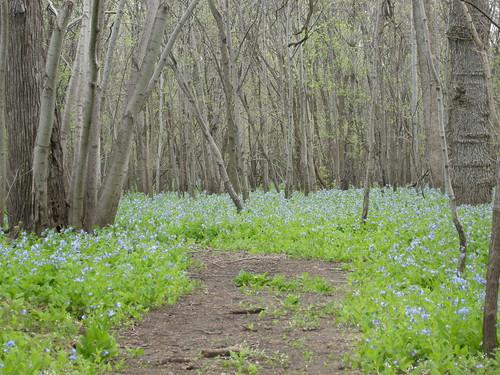 Deer Run Forest Preserve