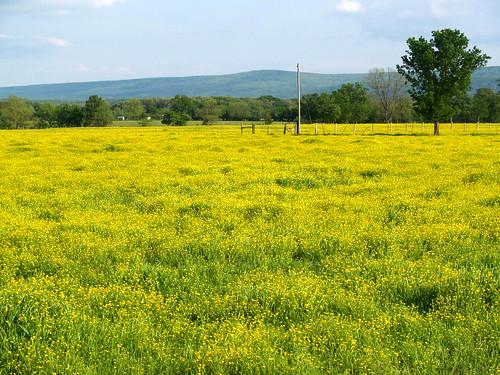 Flowery fields