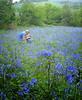 Blue Belle (Need A Haircut) Tags: blue bluebells wales photoshoot tintern naturesfinest instantfav welshflickrcymru wfc10052008chepstow