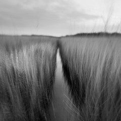 Reed Channel II (Adam Clutterbuck) Tags: uk greatbritain england blackandwhite bw blur beach water monochrome vertical reeds square landscape mono blackwhite unitedkingdom britain somerset bn elements swamp gb marsh bandw panning sq oe burnham burnhamonsea reedbed panned cameramovement brean greengage berrow adamclutterbuck sqbw bwsq showinrecentset openedition